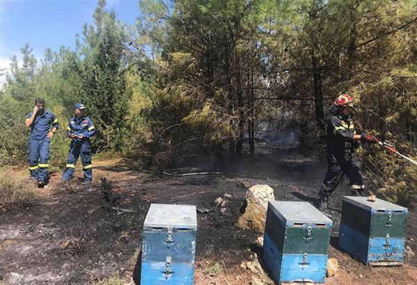 Άμεση επέμβαση Πυροσβεστικής Υπηρεσίας και Δ. Ωραιοκάστρου για φωτιά σε δασική έκταση