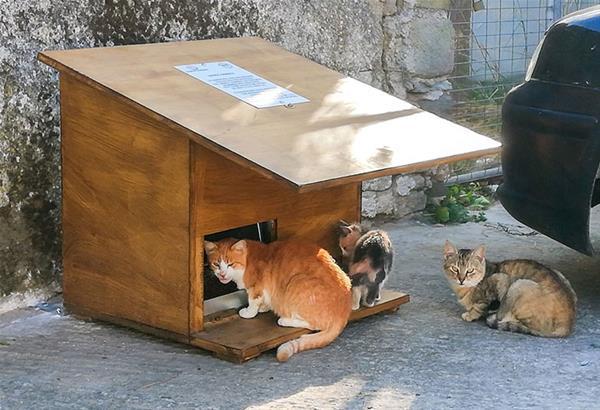 Λήμνος: Δοχεία σίτισης και πότισης για τις αδέσποτες γάτες, με την προσφορά του Στέλιου Ρόκκου