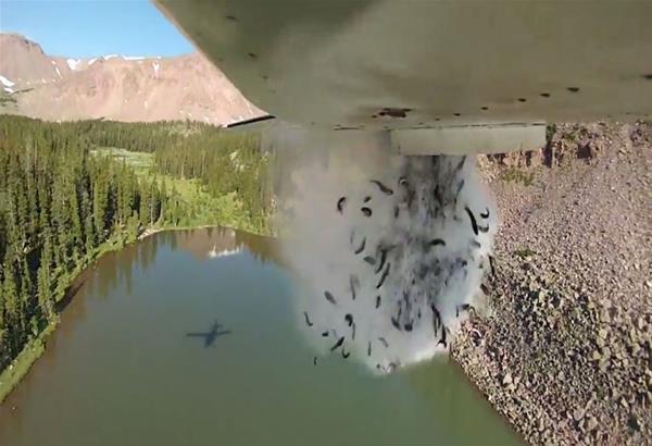 Ψάρια από αέρος σε λίμνη της Γιούτα από το τμήμα Πόρων Αγριας Ζωής των ΗΠΑ. Βίντεο