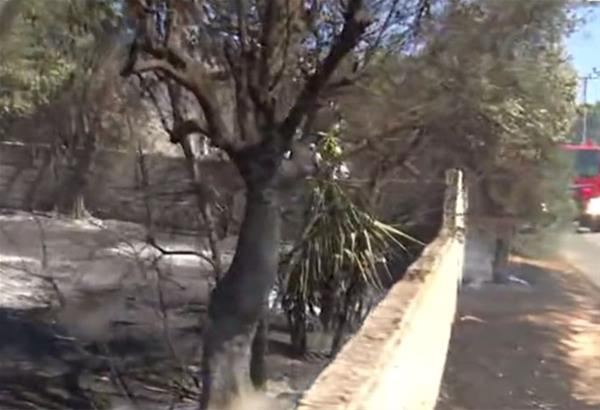 Πυρκαγιές σε Ραφήνα και Πάρνηθα - Εκκενώνεται ο οικισμός Αγία Κυριακή