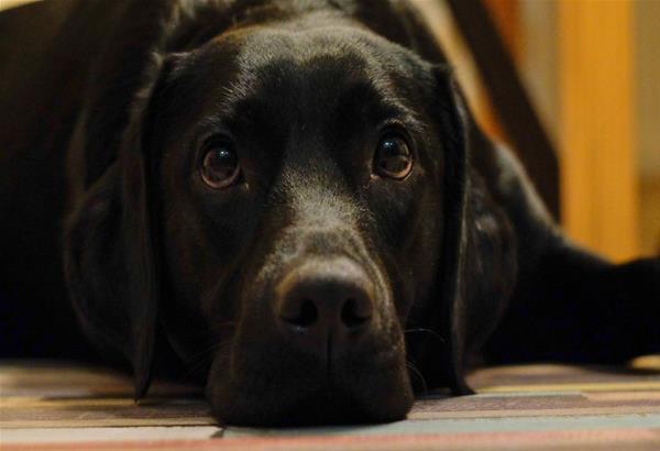 Κρήτη: Τα κατάφερε ο σκύλος που κακοποιήθηκε στα Χανιά. Καταζητείται ο δράστης ο οποίος ...κρύβεται