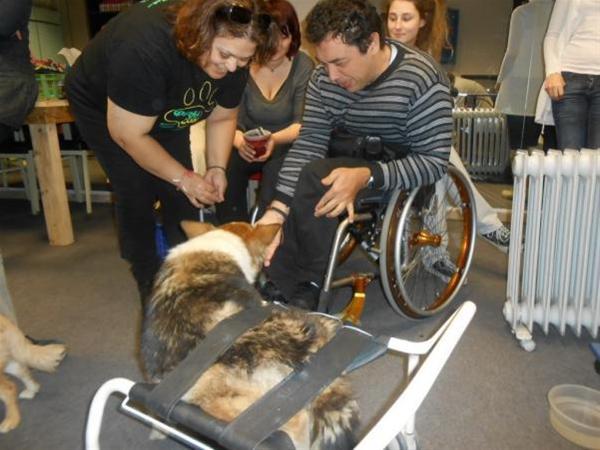Η ανάπηρη σκυλίτσα Φράνκα βοηθά άτομα με ειδικές ανάγκες