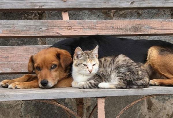 Δ. Νέας Προποντίδας: Δημοπρατείται άμεσα το το Καταφύγιο Αδέσποτων Ζώων Συντροφιάς