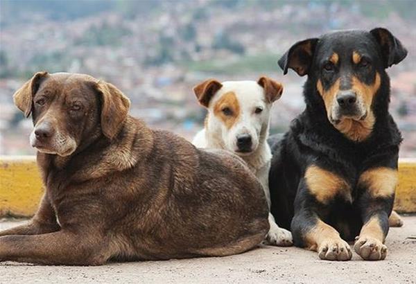 Θεσσαλονίκη: Σπιτάκια και ποτίστρες για τα αδέσποτα σκυλιά του κέντρου