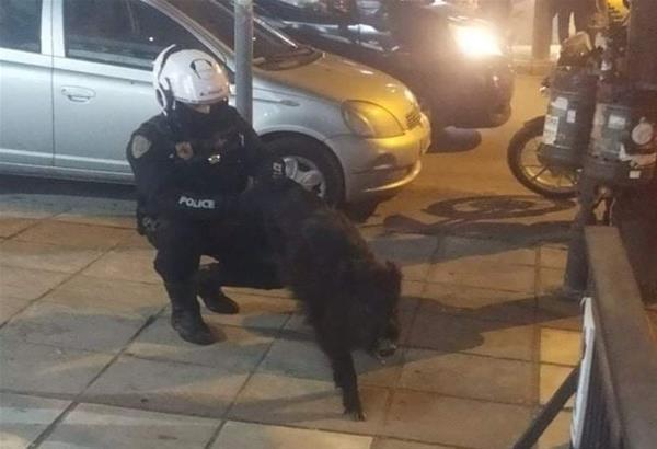 Τούμπα-Θεσσαλονίκη: Αγριογούρουνο έκοβε βόλτες έξω από γνωστή κρεαταγορά (φωτό)