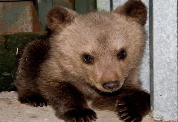 Καστοριά: Αίσιο τέλος για το μικρό αρκουδάκι που εγκλωβίστηκε σε αγροικία