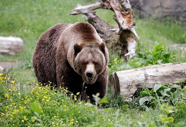 Δήμος Παύλου Μελά: Διαδικτυακά Χριστούγεννα στη φύση με αρκούδες και λύκους