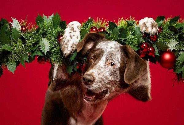 Χριστουγεννιάτικο Φιλοζωικό Bazaar από τις Ζω.Ε.Σ.
