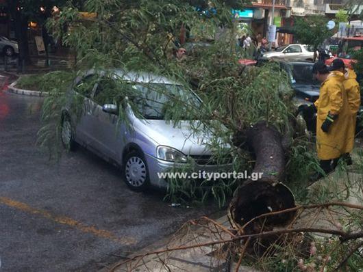 Θεσσαλονίκη: Δένδρο έπεσε πάνω σε αμάξια στο κέντρο της πόλης