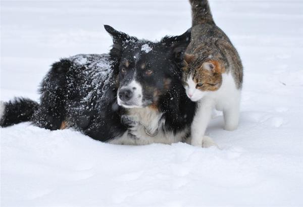 Γλυκό και τρυφερό! Σκύλος σώζει γάτα που θα πέθαινε από την παγωνιά. Βίντεο