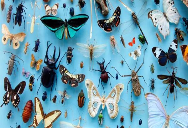 Χρήστος Αθανασίου: Τα έντομα αφανίζονται γιατί πρώτη φορά στην ιστορία τους συνάντησαν τον άνθρωπο