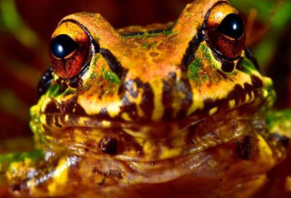 Βολιβία: 20 νέα είδη φυτών και ζώων ανακαλύφθηκαν στην κοιλάδα Zongo