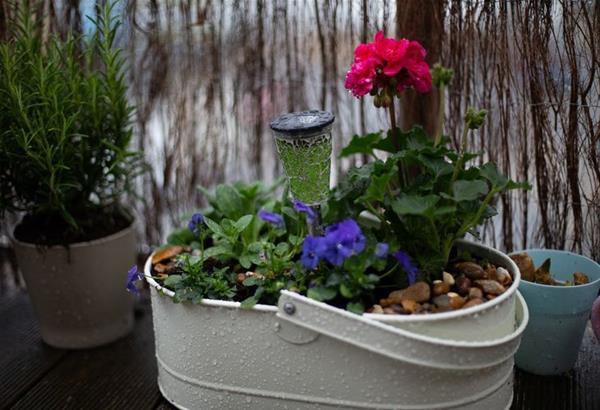 Ανθεκτικά φυτά στο κρύο του χειμώνα για τον κήπο ή το μπαλκόνι σας