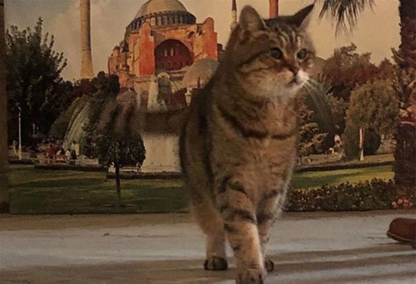 Τουρκία: Πέθανε η Γκλι, η διάσημη «γάτα της Αγίας Σοφίας»