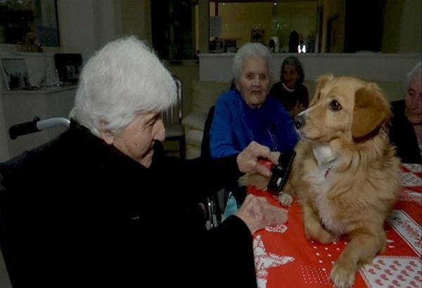 Θεσσαλονίκη: Σκύλοι βοηθοί στην υπηρεσία ατόμων με άνοια ή Alzheimer