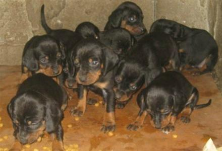 Σύγχρονη «Κρουέλα ντε Βιλ» εξαφάνισε 173 σκυλιά στην Αθήνα