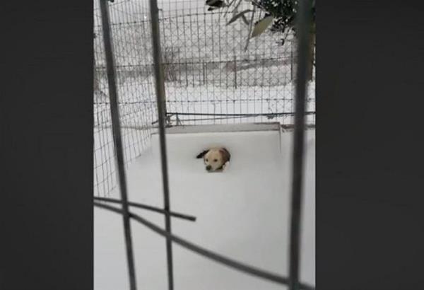 Λήμνος: Άφησαν δεμένο ένα σκυλάκι στον χιονιά