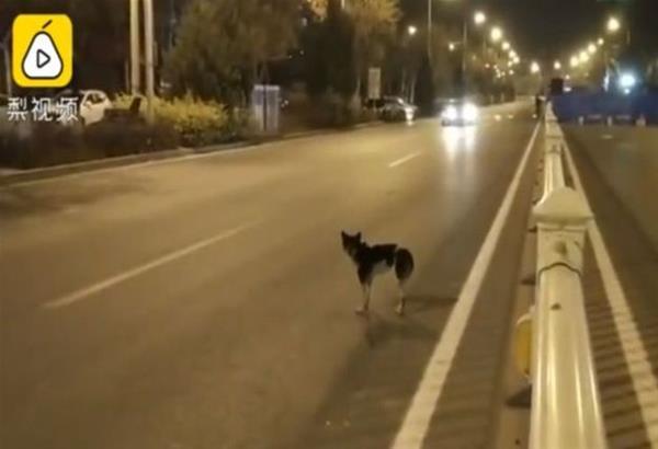 Ο πιο πιστός μας φίλος. Σκυλάκι στέκεται στο σημείο που πέθανε η ιδιοκτήτριά του και την περιμένει