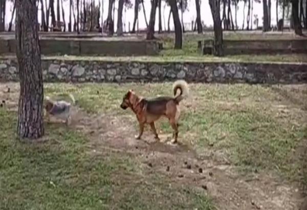 Χαριλάου - Θεσσαλονίκη: Φιλόζωοι επικήρυξαν άτομα που δηλητηρίασαν τον Λουκάνικο και άλλα αδέσποτα σκυλιά. Βίντεο.
