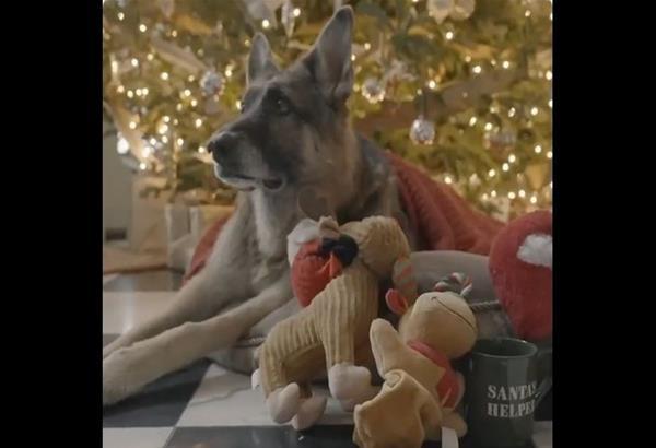 Viral: Ο Major και ο Champ του Τζο Μπάιντεν  εύχονται Καλά Χριστούγεννα (βίντεο)