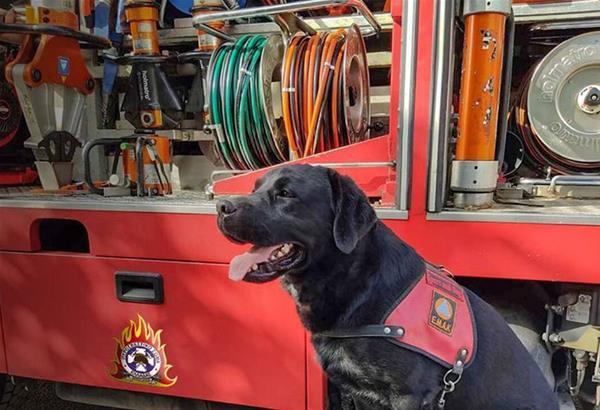 Την Παγκόσμια Ημέρα των Ζώων τιμά το Πυροσβεστικό Σώμα