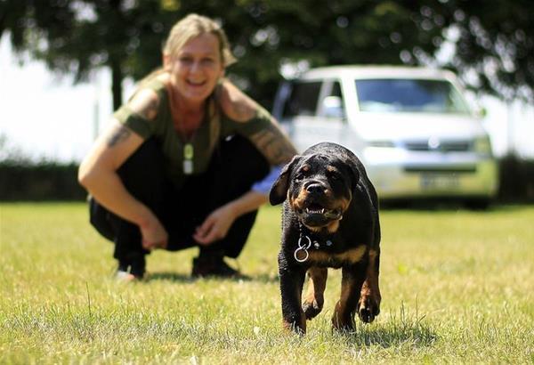 Ροτβάιλερ, επιθετικός σκύλος ή παρεξηγημένη φυλή