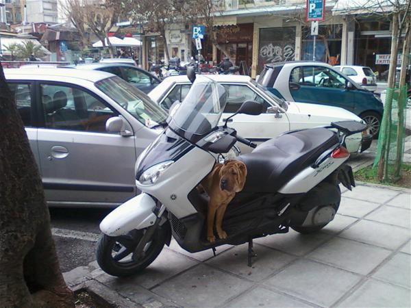 Ο Σκύλος που εκτελεί χρέη security