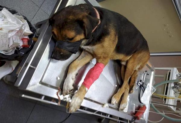 Φιλοζωική οργάνωση «Άριελ»: Δηλητηρίασαν με φόλες αδέσποτα σκυλιά στα Διαβατά Θεσσαλονίκης.