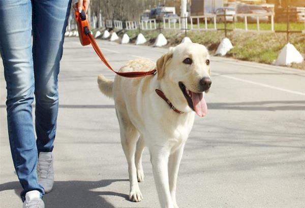 Τα ευτράπελα της καραντίνας -Στη Θεσσαλονίκη ζητούν να υιοθετήσουν σκυλιά με fast track διαδικασίες