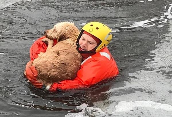 Αίσιο τέλος για παγιδευμένο σκύλο στον ποταμό Νέστο