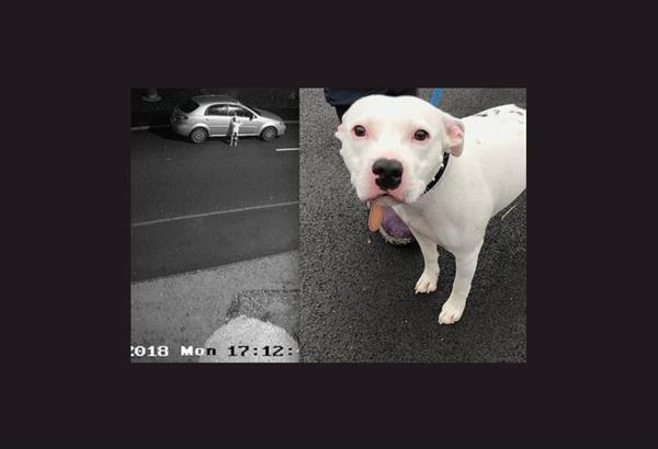 Χιλιάδες οικογένειες ενδιαφέρονται για τον Σνουπ το σκύλο που εγκατέλειψαν πριν τα Χριστούγεννα