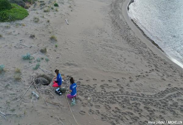 ΑΡΧΕΛΩΝ: Την κατάλληλη στιγμή για τα χελωνάκια φτάνουν οι εθελοντές από το εξωτερικό